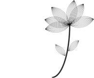 Black fragile flower. Fragile black flower on white background Royalty Free Stock Photos