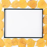 Black frame and dry yellow autumn leaves. On a white background, top view Royalty Free Stock Photography