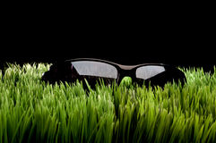 Black framed sunglasses on grass Royalty Free Stock Photography