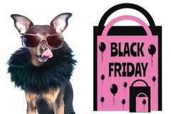Black friday concept, photo and illustration, stylish dog with glasses licked, next to the packages and the inscription. Black friday stock photos