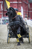 Black friesian horse carriage driving Stock Image
