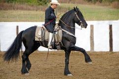 Black Friesian Horse Stock Photography