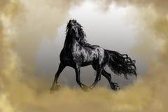 Black Friesian stallion horse in fog