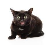 Black frightened cat. Isolated on white background Royalty Free Stock Image