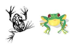 A black frog and a green frog Royalty Free Stock Photos