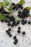 Black-fruited mountain ash. Berries of a black-fruited mountain ash on a table royalty free stock image