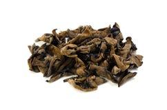 Black fungus Royalty Free Stock Photo