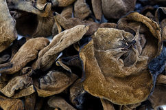 Black fungus Royalty Free Stock Photography