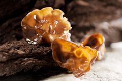 Black fungus Stock Photo