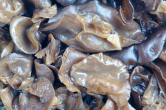 Black fungus Royalty Free Stock Photo