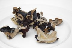 Black fungus Stock Images