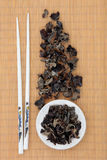 Black Fungus Stock Images