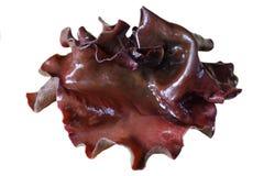 Black Fungus Mushroom Royalty Free Stock Photos