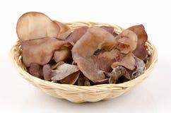 Black fungus on white background Royalty Free Stock Photos