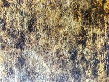 Black fungus on wood panel. The dirty on wood table panel has black fungus stains royalty free stock images