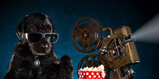 Black funny dog with old style movie projector. Black funny dog with old style movie projector, still-life, close-up Royalty Free Stock Photo