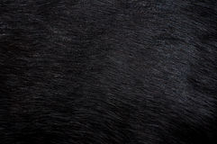 Black fur. Background Stock Images