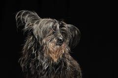 Black fur dog in a dark photo studio. Black fur dog in dark photo studio Stock Photo