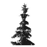 Black Fur-tree silhouette isolated on white background.  Stock Images