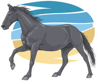 Black galloping horse illustration Royalty Free Stock Images