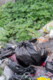 Black garbage bags on garbage dump Unhygienic And must not be le Royalty Free Stock Photography