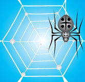 Black garden spider and web with dew. Royalty Free Stock Images