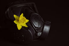 Black gas mask with yellow daffodil Stock Image