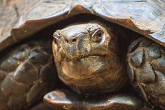 Black Giant Tortoise Stock Image