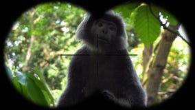 Black gibbon monkey seen through binoculars. Watching animals at wildlife safari. Shot with a Sony a6300 fps 29,97 4k stock footage