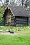 Black goat on a lawn near the house. The black goat lies on a grass near the wooden house Royalty Free Stock Photography