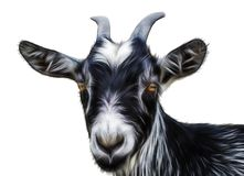 Black goat on a white. Background stock images