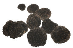 Black Gold. Truffles isolated on white. Truffles are valuable subterranean ascomycetous fungi. They have strong odor and are used sparingly. Truffles are royalty free stock images