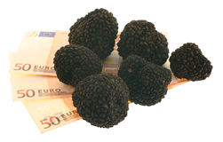 Black Gold. Truffles on 50 Euro banknotes, isolated on white. Truffles are valuable subterranean ascomycetous fungi. They have strong odor and are used sparingly stock photography