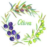 Black, Gold or blonde and Green Olive branches with fruits, set,. Green, Black and Gold Olive branches frame, hand painted watercolor illustration isolated on Royalty Free Stock Photos