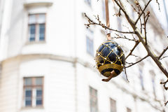 Black and gold painted Easter egg on the tree Stock Image