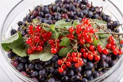 Black gooseberries and red currants stock photography