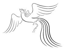 Black graceful Firebird contour. Isolated over white. Hand drawing vector illustration Royalty Free Stock Image