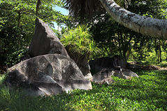 Black granite rocks in the thickets of tropical Stock Image