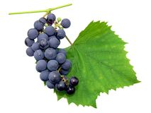 Black grape. With leaf - isolated Stock Photography