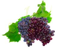 Black grape Stock Photos