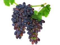 Black grape Stock Photography