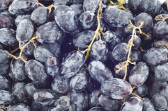 Black grape. Royalty Free Stock Photography