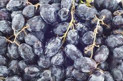 Black grape. Royalty Free Stock Photography