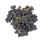 Black grape bunches Royalty Free Stock Photo