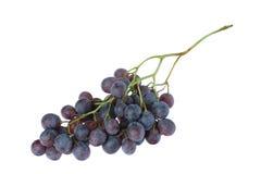 Black grape cluster Stock Image