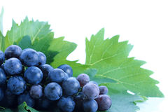 Black grape cluster with leaves Royalty Free Stock Photos