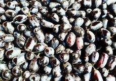 Black grape fruit, india Stock Image
