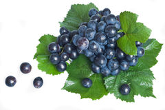 Black grape with leaves Stock Image