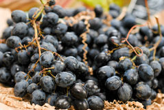 Black grapes. In a vegetables and fruits shop Royalty Free Stock Photos