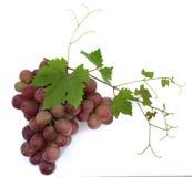 Black grapes Stock Image
